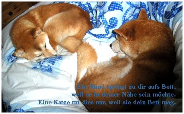 Schöne Zitate über Hunde Worte Zitate Weisheiten